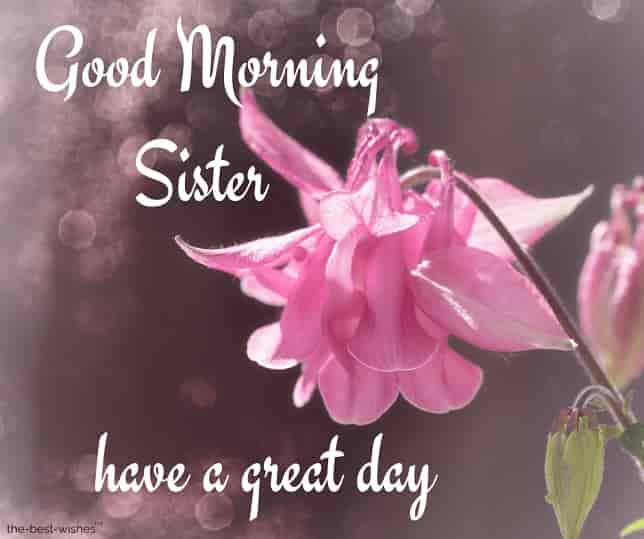 good morning sister have a great day