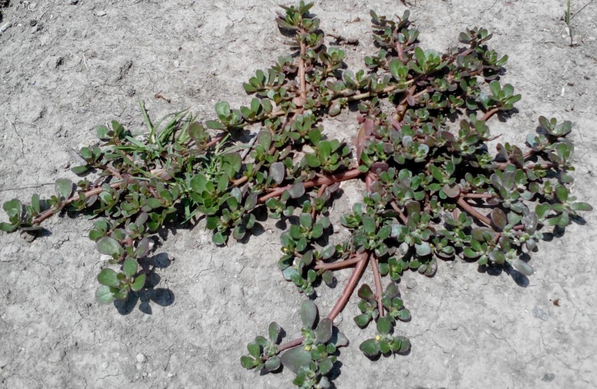 El cuexcomate plantas recolectadas for Jardin que planter en janvier