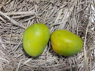 Stevia. Honey Coconut Sugar Brown Sugar Raw Cane Sugar Granulated White Sugar etc., SUGAR, HEALTH