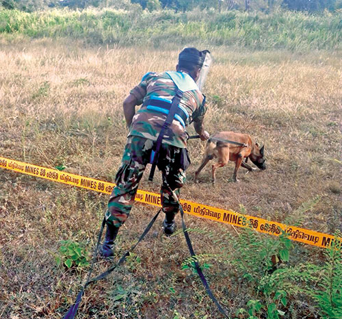 Sri Lanka Army's Mine Detection Dog, Alvin
