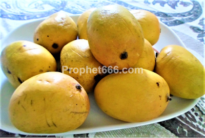 Spell to Attract Lover Using Mango