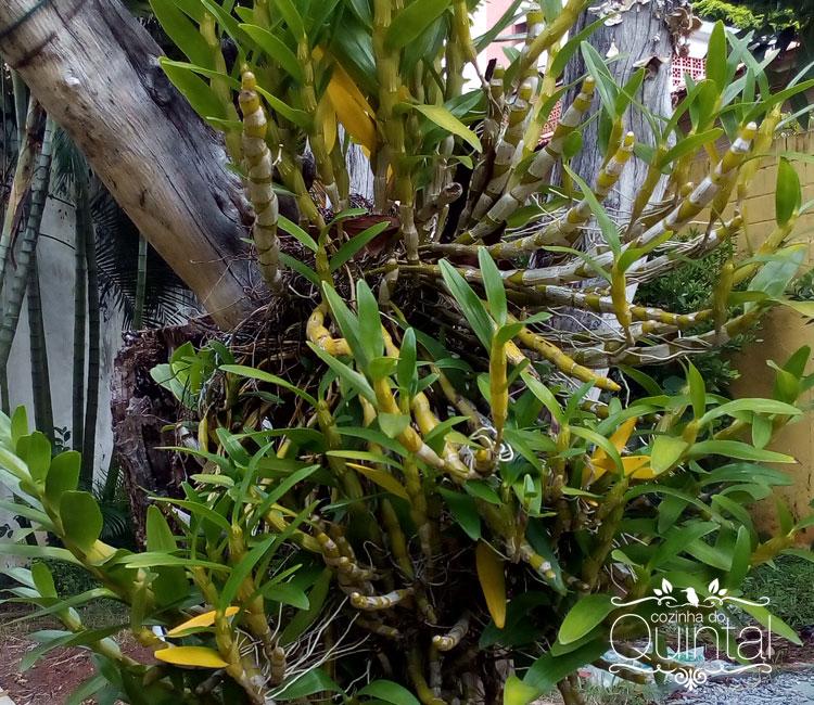 A orquídea ainda não floriu este ano. São cor de rosa. Aguardo ansiosa!