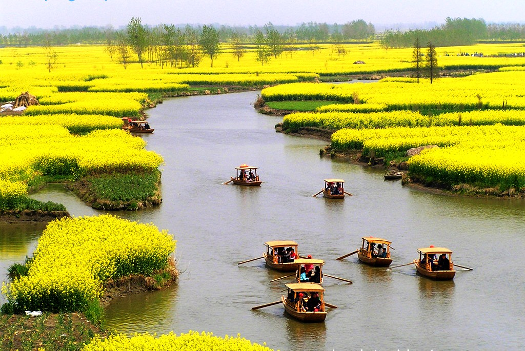 Luoping A Beautiful Canola Fields In China Travell And