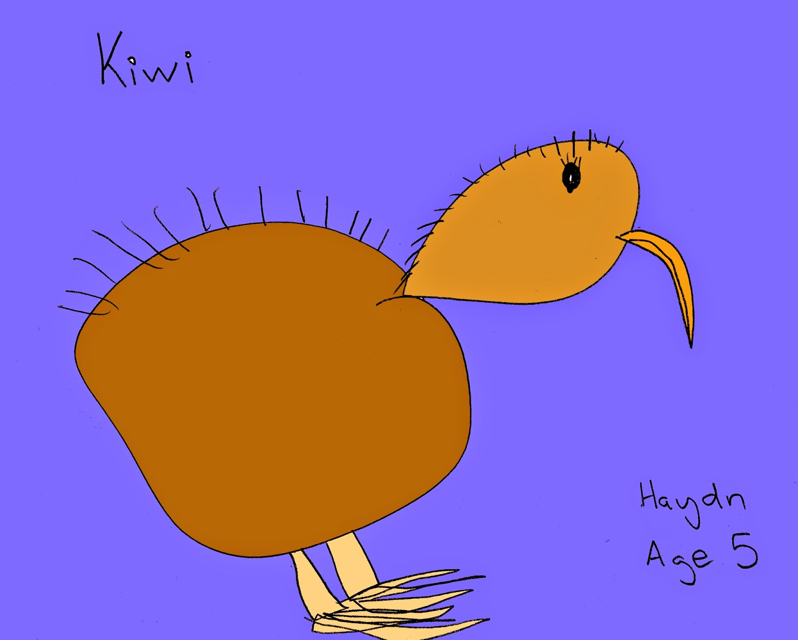 A picture of a Kiwi by Haydn Gedge