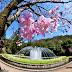 Lịch trình hoa anh đào nở ở tại Đài Loan