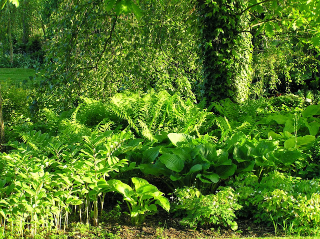 ogród leśny, epimedia, hosty, paprocie
