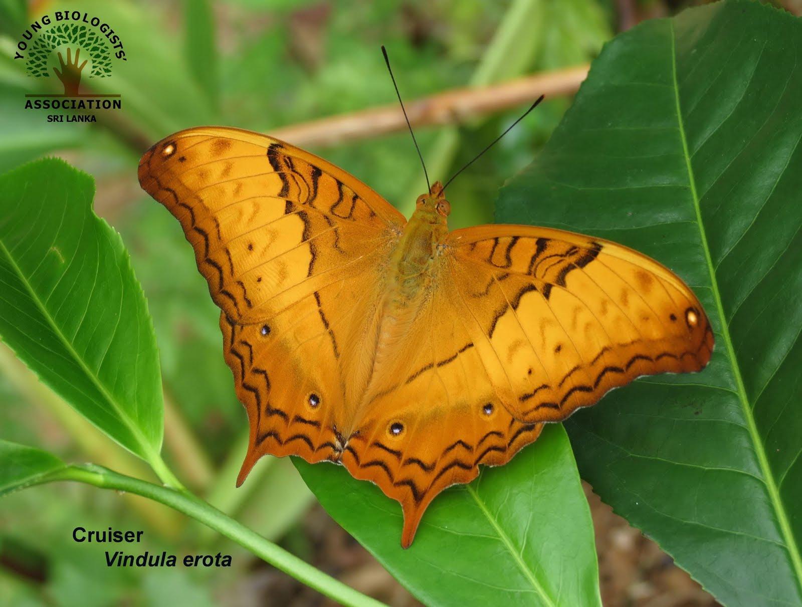 Makandawa Forest Reserve   Young Biologists' Association