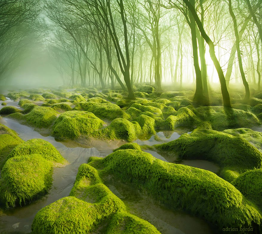 3. The Moss Swamp In Romania - 22 Mysterious Forests I'd Love To Get Lost In