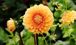 Blog O Sklepie Rosliny Magdapl Z Roślinami Ogrodowymi