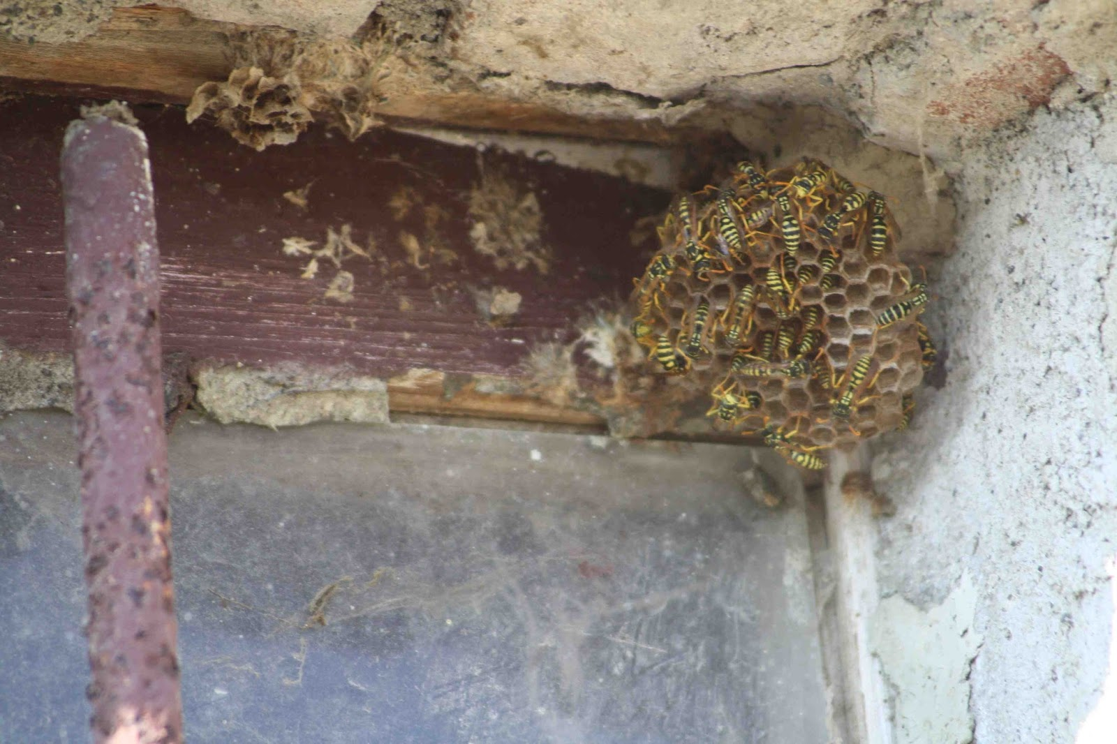Finestra Oblò Leroy Merlin le vespe: c'è anche e ancora (forse) questo mondo!