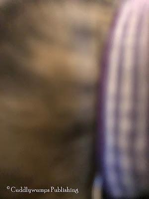 Real Cat Paisley: Selfie gone wrong_Feb. 2018