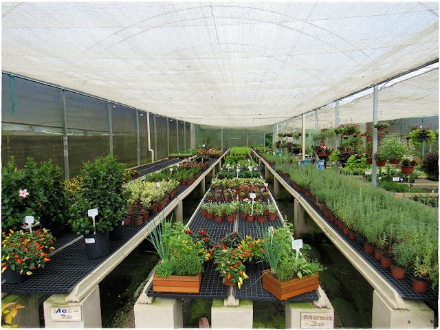 Le Jardin Parque de Lavandas. Parque com acesso gratuito em Gramado-RS, que reúne em grande área belíssimos jardins, muitas flores e estufas.