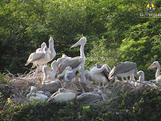 Nelapattu bird sanctuary Andhra Pradesh Timings