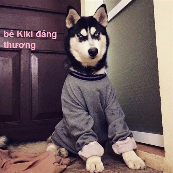Cho bạn thân mượn chó Husky, ai ngờ bạn đem...bán luôn