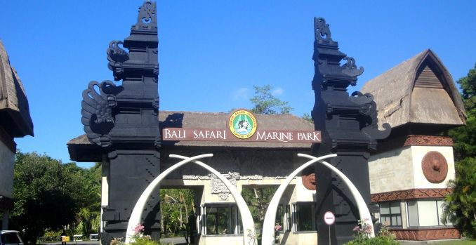 Dragon Package - Bali, Zoo, Dragon, Package, Holidays, Tours, Attraction, Safari and Marine Park