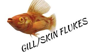 skin-flukes