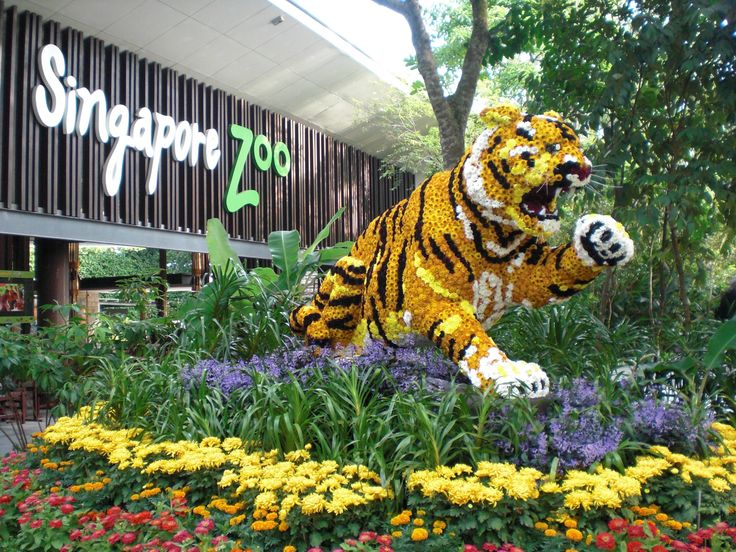 Top Rated Places to Visit in Singapore | Singapore Zoo