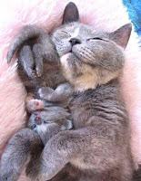 Anak Kucing Lucu Tidur Bareng