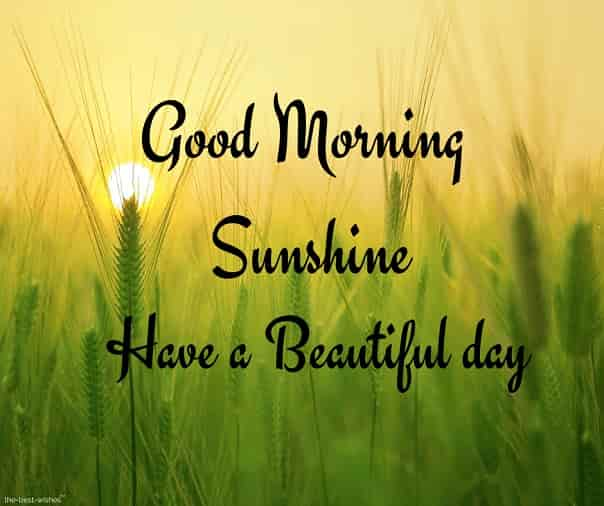 good morning sunshine have a beautiful day