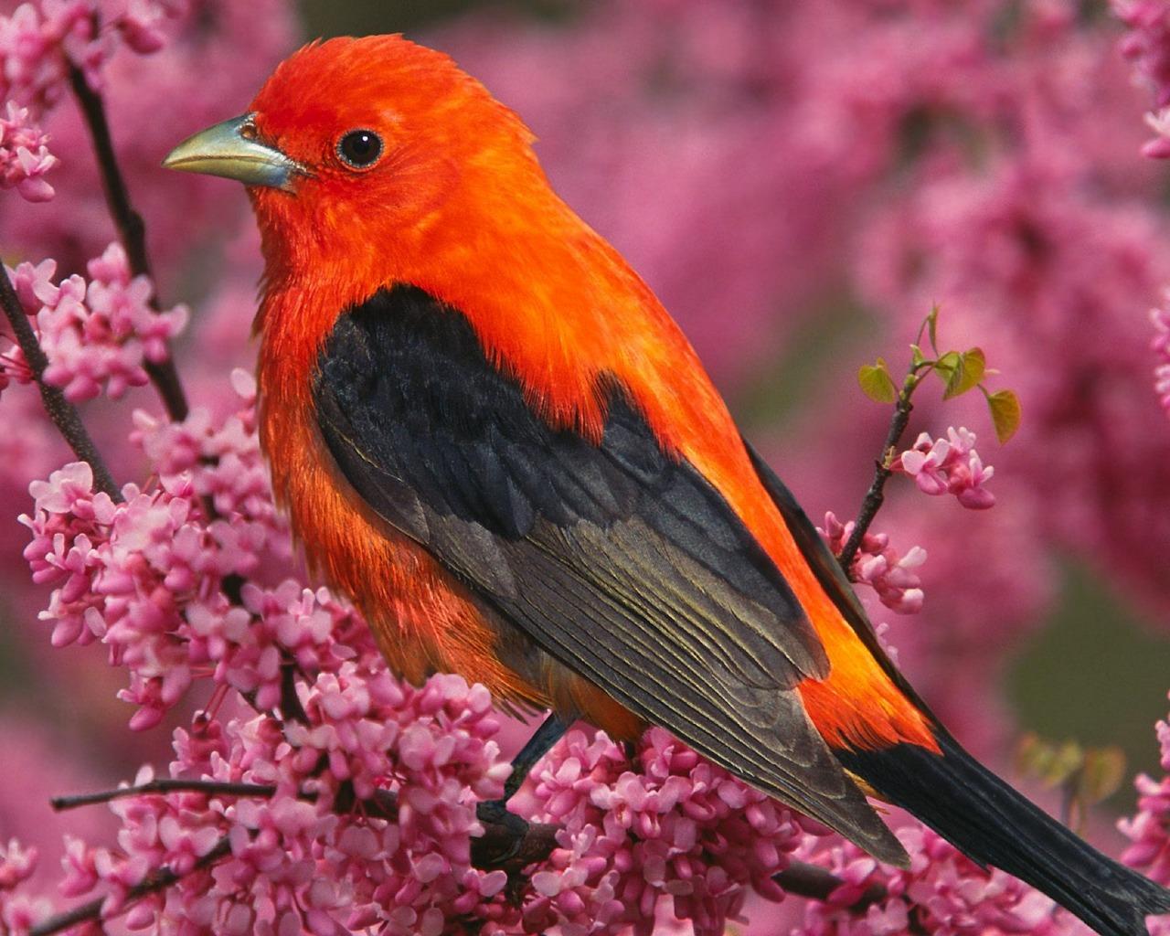 Birds-HD-Wallpapers-1280-X-1024-2.jpg