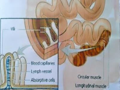 Gambar Cara Pengobatan Darurat Untuk Infeksi Berat Usus Pada Bayi