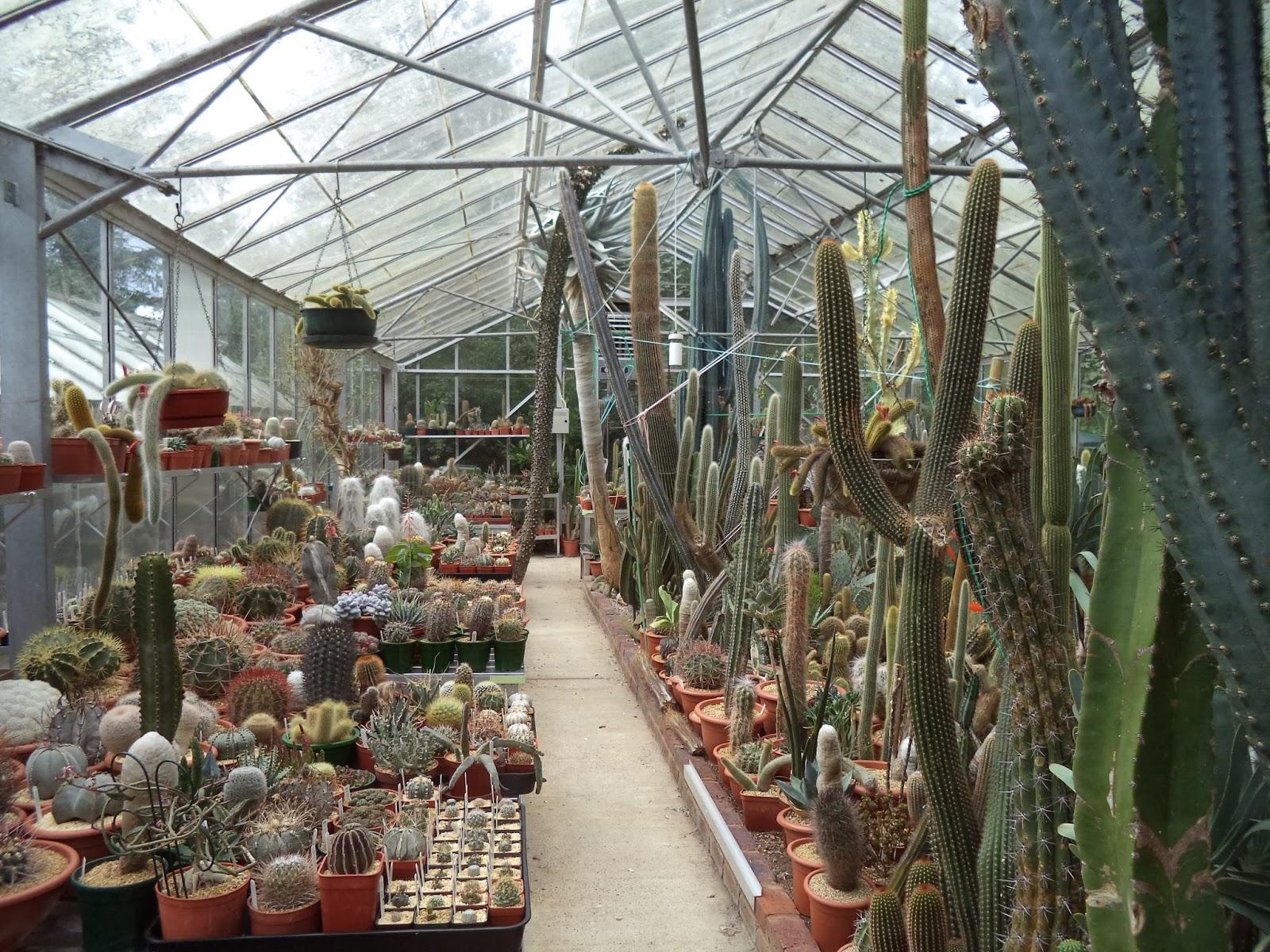 DSC01668 Cactus Plants Inside Home on inside desert plants, inside bonsai plants, inside flowers plants, inside rose plants, inside trees plants, inside bamboo plants, inside fern plants, inside flowering plants,