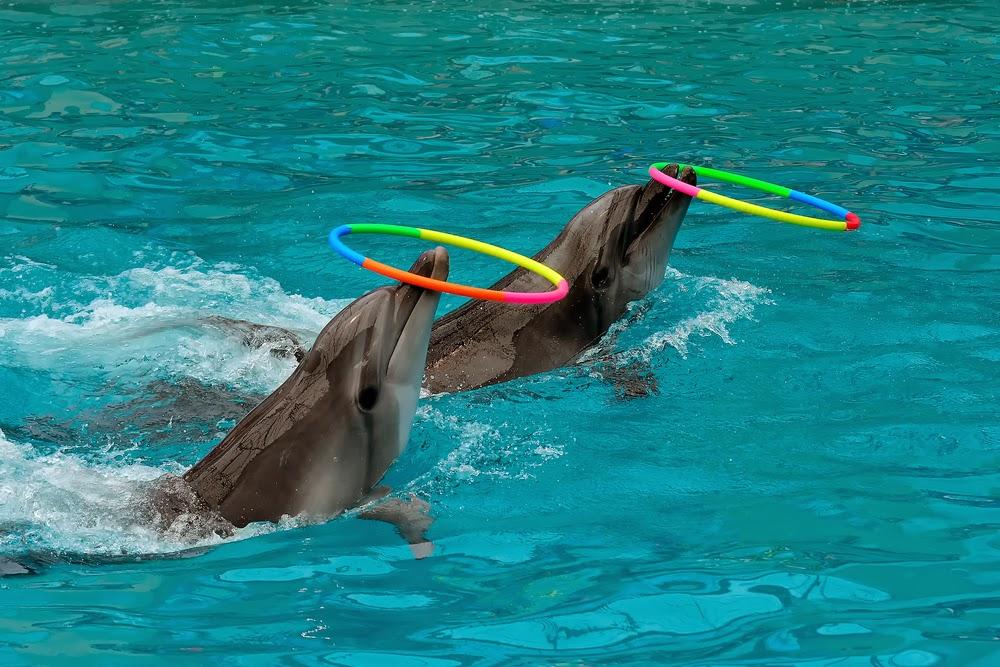 delfin reifen