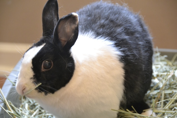 Lulu explains bunny basics and the top 10 reasons rescue rabbits rock