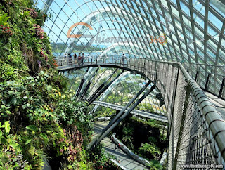 Cloud Forest Singapore - Khu rừng mây