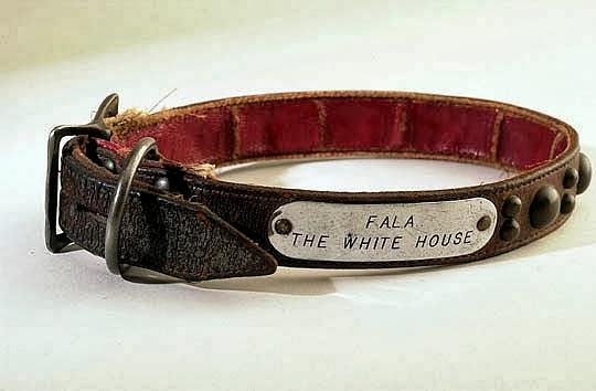 Scottish Dog Collar