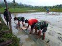 Rakyat Talaud Siapkan 10 Hektar Lahan Baru