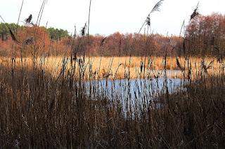 woda, las, piękna pogoda, krajobrazy, widoki
