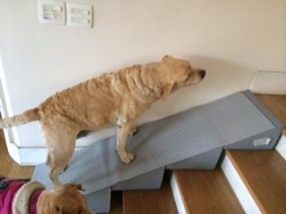 rampa de sobrepor em escadas para cães