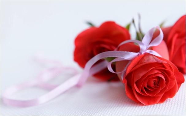özür dilemek için çiçek
