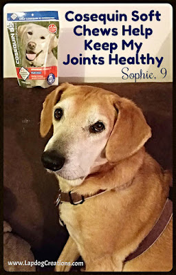 Cosequin Helps Keep Sophie's Joints Healthy - Keep Your Pet's Joints Healthy Too! - Lapdog Creations