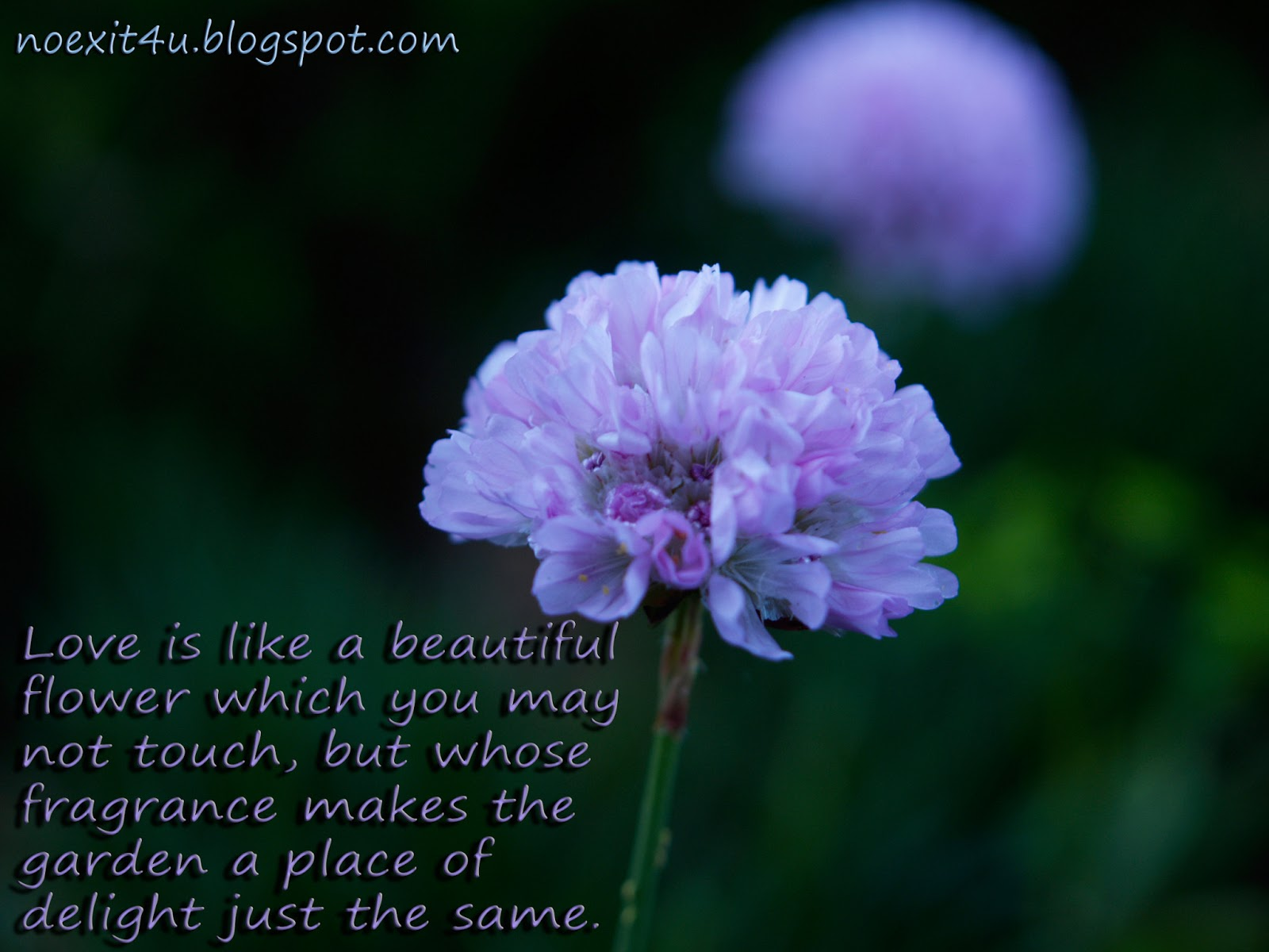 Photo Gallery Quotes About Flowers And Love
