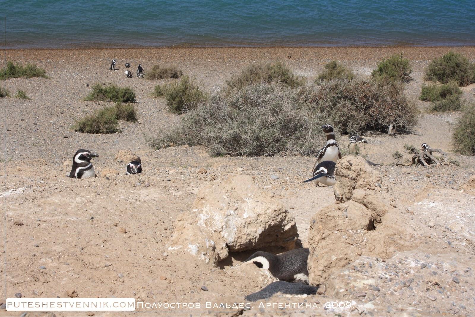 Пингвины на берегу и в норе