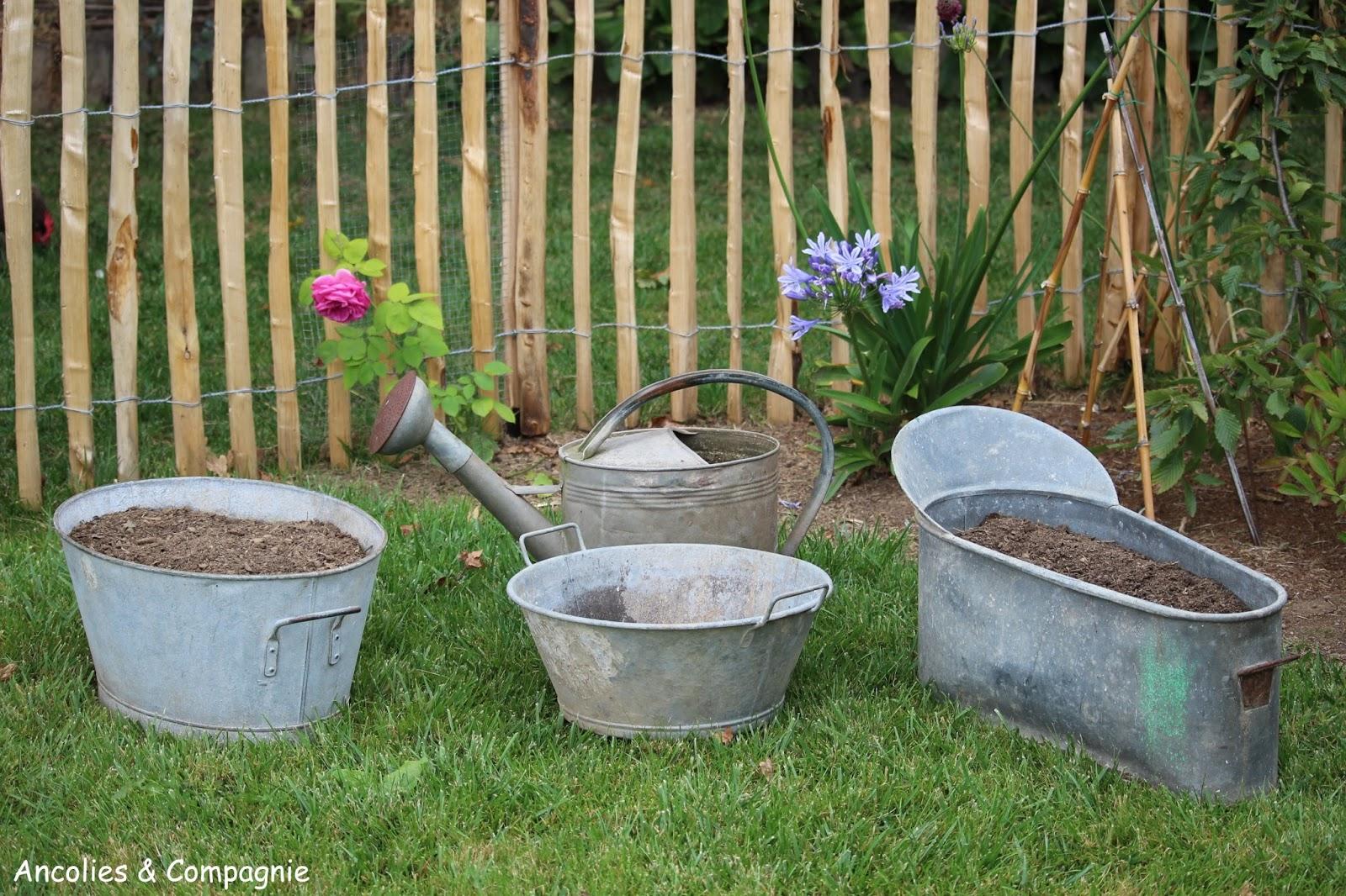 ancolies compagnie du zinc au jardin. Black Bedroom Furniture Sets. Home Design Ideas