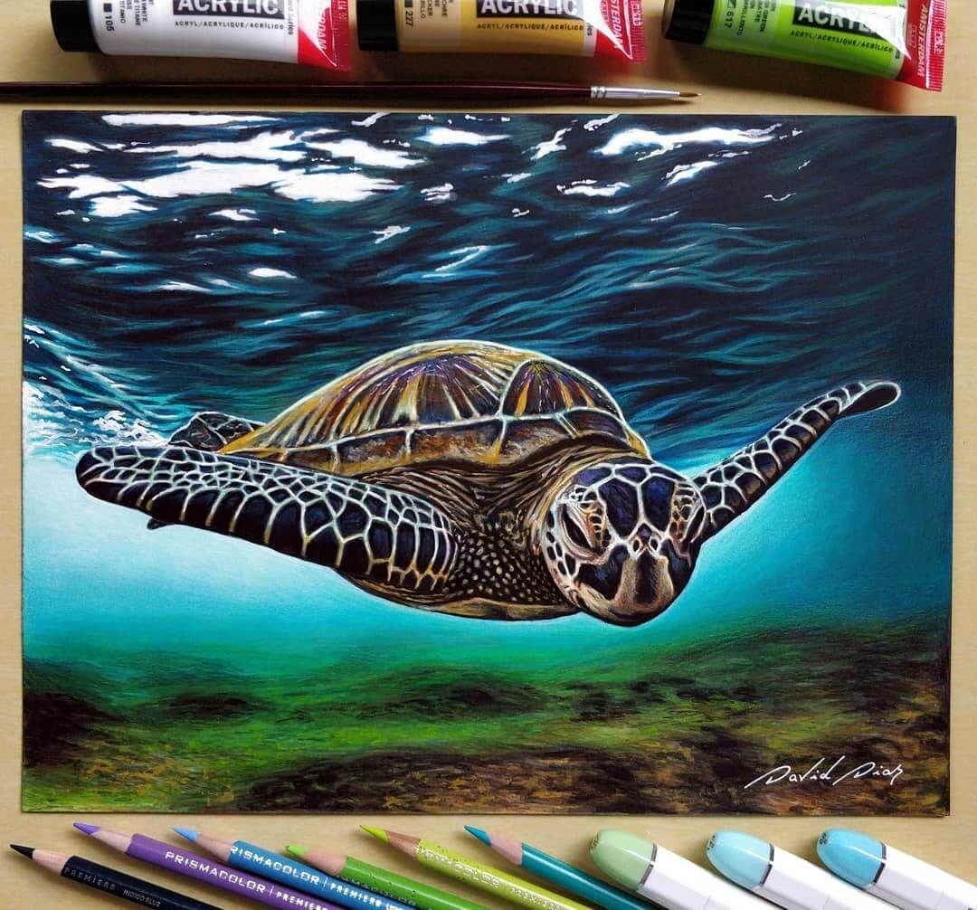 01-Sea-Turtle-David-Dias-Drawings-Spanning-Many-different-Subjects-www-designstack-co
