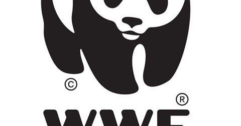 wwf as a business essay Wwf essay  topics:  critical essay ideas in management writing instructions and marking rubric this assessment task is an essay the rmit college of business requires you to use a particular style of essay writing which involves both the way the essay is structured and the way that you acknowledge other people's ideas used in your work.
