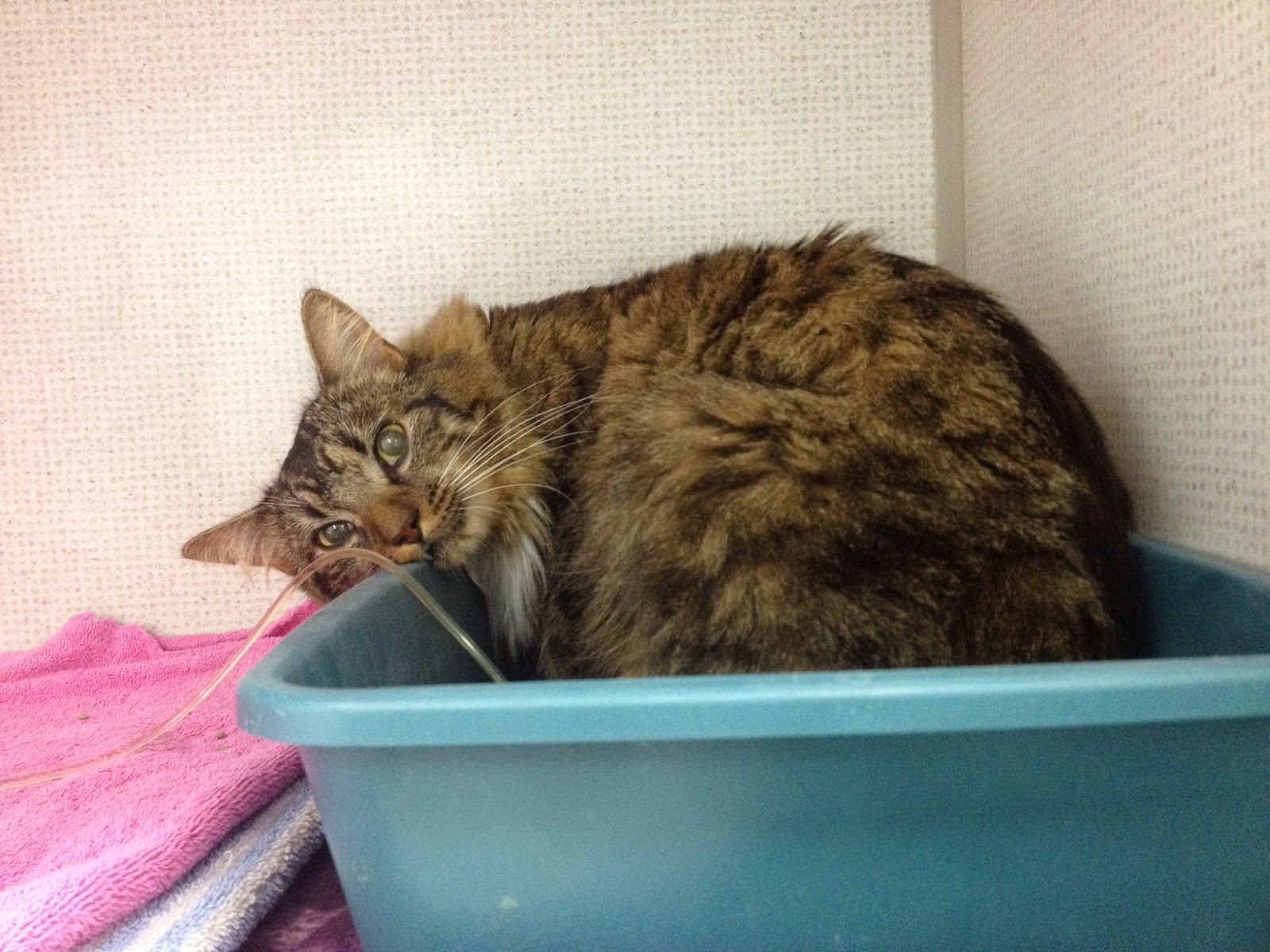 Exclusively Cats Veterinary Hospital Blog Flooding The Litterbox Chronic Kidney Disease And Your Cat