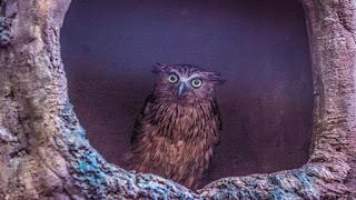 Owl bird desktop wallpaper travel photography