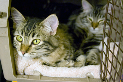Cats relaxing in pet carrier
