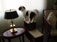 cachorros para apartamento