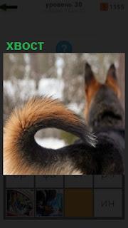 1100 слов стоит собака с хвостом в колечке 30 уровень
