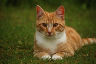 Contoh Descriptive Text tentang Animal Bahasa Inggris dan Artinya 2 Contoh Descriptive Text tentang Animal Bahasa Inggris dan Artinya