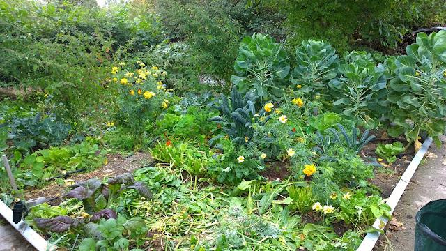 Gemüsebeet im Oktober   (c) by Joachim Wenk