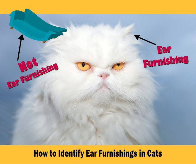 Image--How to identify ear furnishings in cats