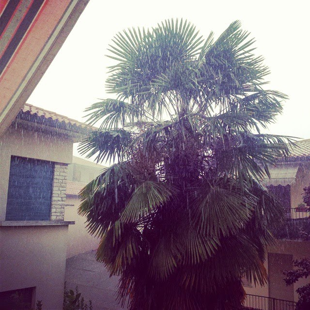 The palm tree in our backyard on a rare rainy day in Vicenza, Italy