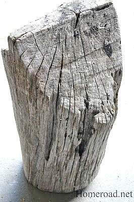 driftwood stump